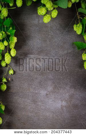 Hop twig over old cracked gray wooden table background. Vintage style.