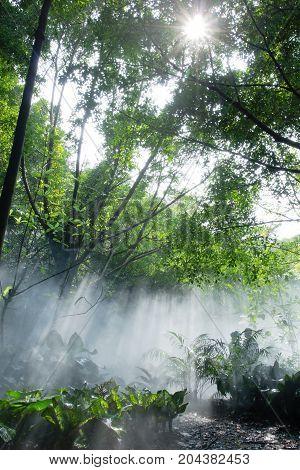 Rainforest Under Jesus Light