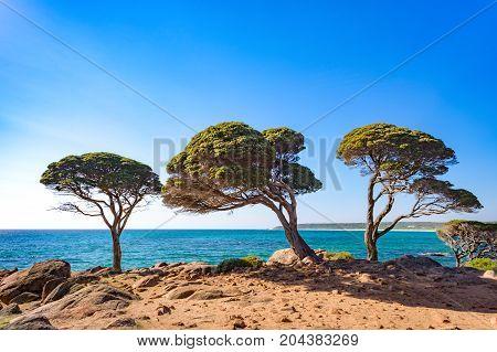 Trees on the coast at Bunker Bay in Dunsborough, Western Australia, Australia.