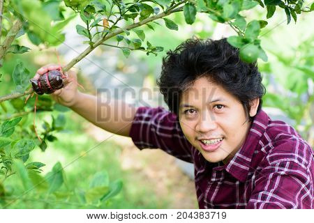 Asian young farmer grafting on lime tree branch,induced root,agricultural technique