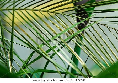 Palm leaf, painted in Golden paint. Texture. Hot country exotic