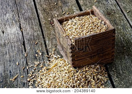 Square Wooden Box Of Dry Barley Next To A Pile Of Barley On Rustic Wooden Board.