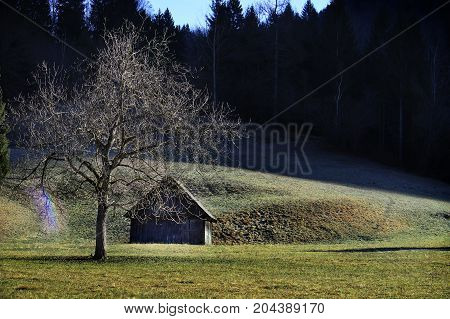An old hut in the mountains with a leafless tree and rainbow nearby.