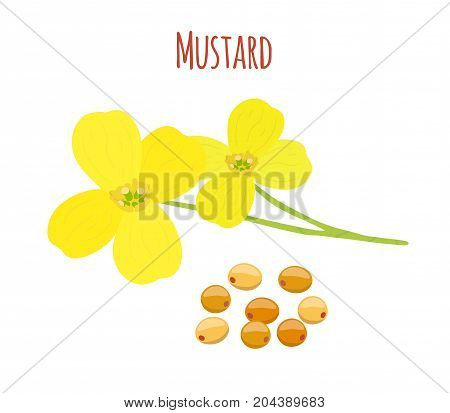 Mustard flower, seeds. Organic condiment, vegetarian vegetable. Made in cartoon flat style. Vector illustration