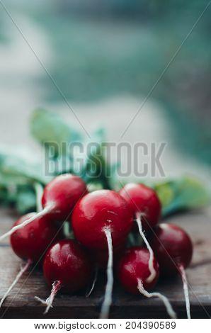 Bunch Of Fresh Radisav On Wooden Background