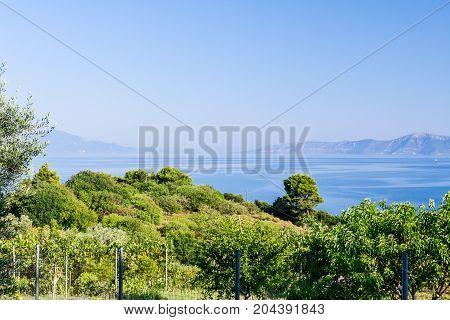 View on the fenced vineyard at Mediterranean sea