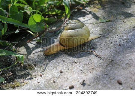 Small yellow snug on the ground through stone and the grass