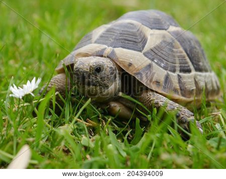 A photo capturing a spur thighed tortoise