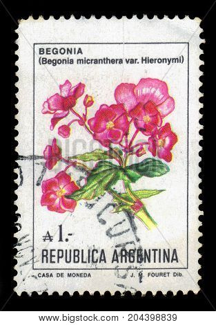 ARGENTINA - CIRCA 1985: a stamp printed in the Argentina shows flower of begonia micranthera, series, circa 1985