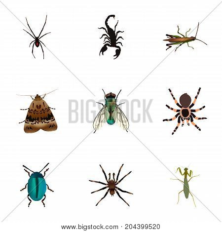 Realistic Housefly, Poisonous, Arachnid And Other Vector Elements