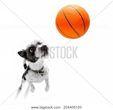 Basketball Poodle Dog