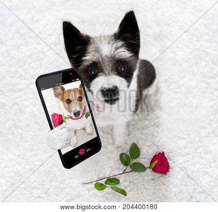 Happy Valentines Dog Selfie