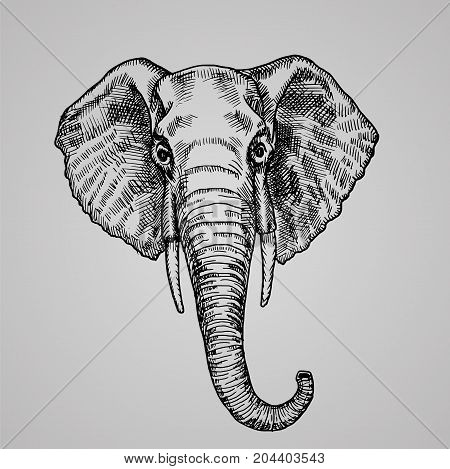 Elephant head engraving style. A beautiful Indian animal in the sketch style. Vector illustration. EPS 10.