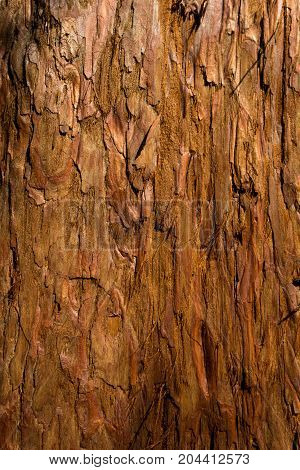 Close-up of a brown Tree Bark. View on a structured Bark of a Tree. Natural Backgrounds