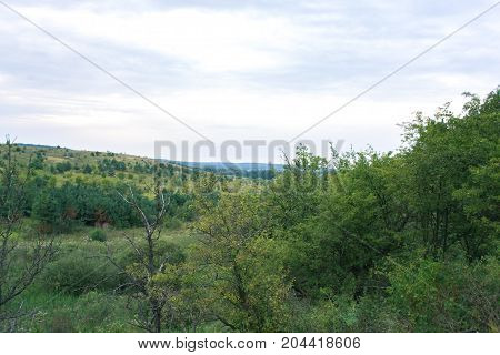 Forest landscape on a cloudy summer day