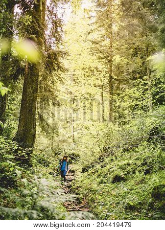 Hiker woman going in forest. Woman traveler