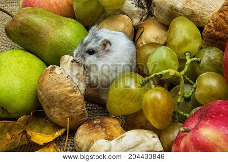 hamster with grapes and mushrooms, autumn still life