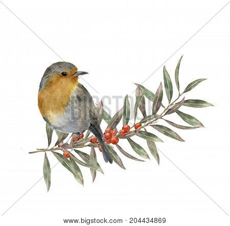 Watercolor robin sitting on tree branch with red and yellow leaves, berries. Autumn illustration with bird and fall leaves isolated on white background. Nature print for design