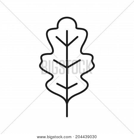 Oak leaf linear icon. Thin line illustration. Contour symbol. Vector isolated outline drawing