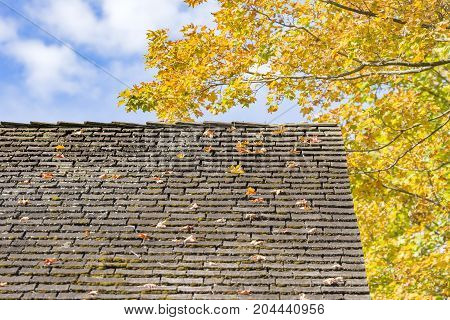 Old roof littered with autumn leaves falling from tree blue sky with white clouds. Home maintenance concept