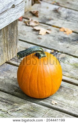 Closeup Of Small Pumpkin On Porch Outside Weathered Barn Door