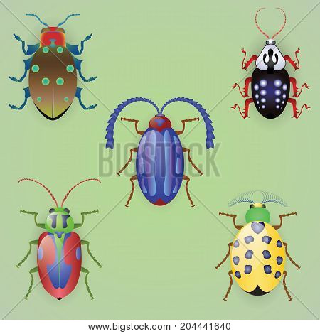 Five colorful beetles, isolated, light green background