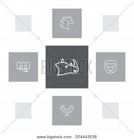 Collection Of Feline Bear, Elephant, Rhino And Other Elements.  Set Of 5 Alive Outline Icons Set.