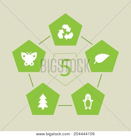 Collection Of Spruce, Foliage, Moth And Other Elements.  Set Of 5 Bio Icons Set.