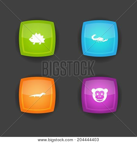 Collection Of Porcupine, Ape, Gecko And Other Elements.  Set Of 4 Zoo Icons Set.