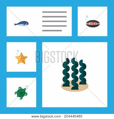 Flat Icon Sea Set Of Scallop, Tortoise, Alga And Other Vector Objects