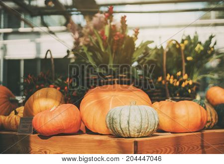 Beautiful still-life of edible ripe pumpkins and just recently harvested for Thanksgiving Day and baskets full of flowers in defocused background sunny summer day shallow depth of field