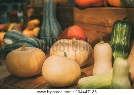 Thanksgiving Day still-life: multiple ripe pumpkins of different sizes types and colors are laying on wooden table near marrows on sunny autumn day after harvesting shallow depth of field
