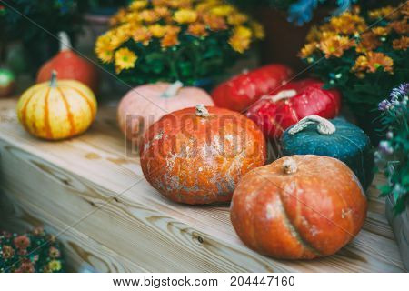 Still-lifefor Thanksgiving Day: various pumpkins of different forms types and colors are laying on wooden shelves surrounded by flowers afterautumn harvesting; shallow depth of field
