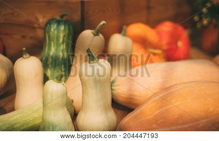 Thanksgiving Day still-life: various marrows of different sizes types and colors are laying on wooden table next to pumpkins sunny autumn evening after gathering shallow depth of field