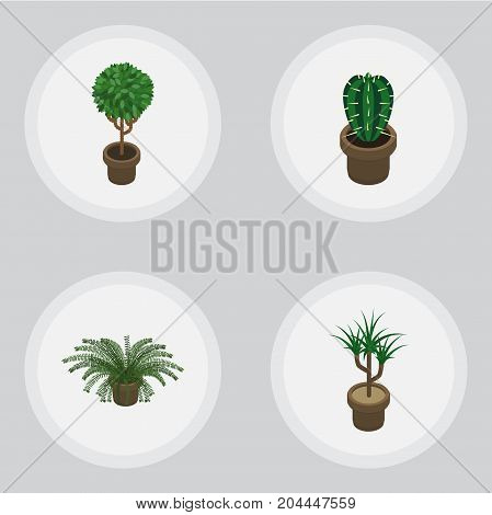 Isometric Flower Set Of Tree, Peyote, Houseplant And Other Vector Objects