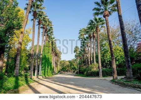 A Walking Path Surrounded By Tall Palm Trees In A Small Public Park In Nicosia City