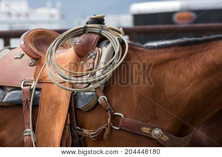 Roping Horse Details And Tack At A Rodeo