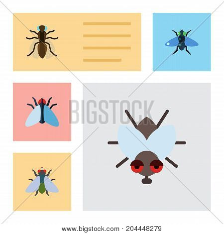 Flat Icon Buzz Set Of Fly, Mosquito, Dung And Other Vector Objects