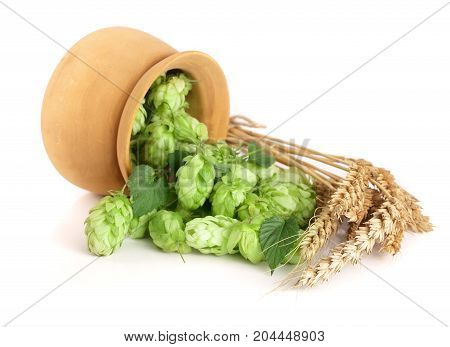 hop cones in a wooden bowl with ears of wheat isolated on white background close-up.