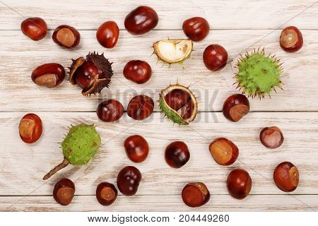 chestnut isolated on a light wooden background. Top view.