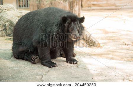 Image of a black bear , animal wildlife.