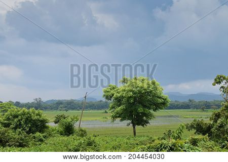 Approaching rain over an open field with a lone tree
