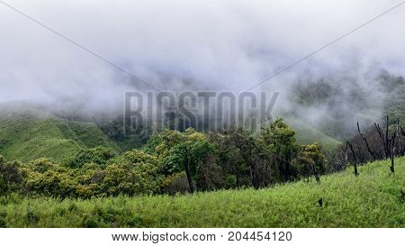 Tropical montane wet forest near Dzukou Valley in Nagaland, south-east Asia
