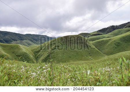 Spectacular view of green hills covered in white wildflowers in Dzukou Valley, Nagaland