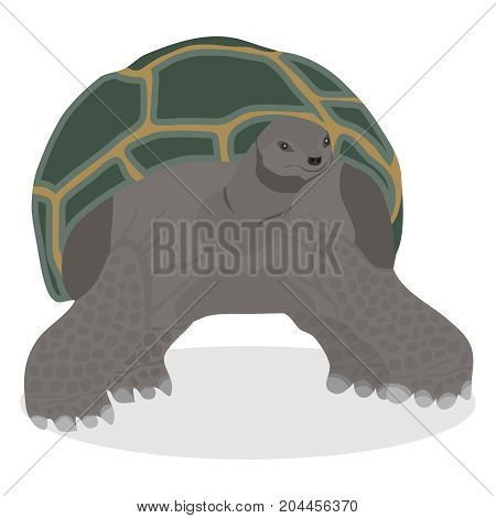 Turtle a great realistic turtle. Flat design vector illustration vector.