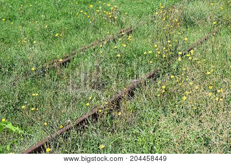 Rusty abandoned railway track covered with grass and flowers