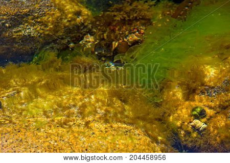 pitfalls and shells covered with algae, small shells. in the clean sea