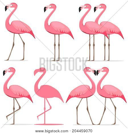 Flamingo a set of pink flamingos. Flat design vector illustration vector.
