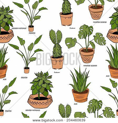 Color houseplants Vector pattern of hand drawing