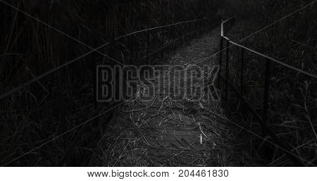 Quiet wooden bridge and woodsroad with railing in the woods
